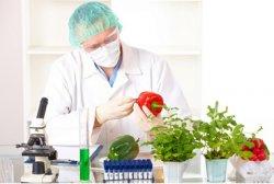 В ООН исследовали масштабы распространения ГМО