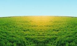В ООН впервые опубликовали сводные данные по растительному покрову Земли