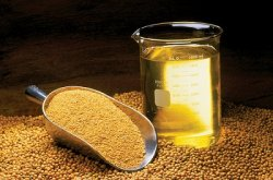 Соевый шрот – «золотой стандарт кормов для животных»
