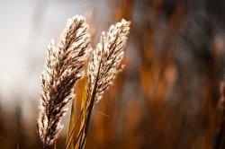 Татарстан и Япония планируют сотрудничество в сфере сельского хозяйства