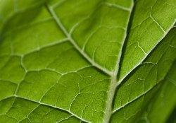 Натуральные аттрактанты могут заменить пестициды в борьбе с вредителями