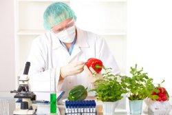 В Алтайском крае разрабатывают прибор для анализа продуктов на содержание ГМО