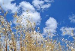 Растущий уровень углекислого газа в атмосфере влияет на качество продуктов
