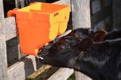 Алтайские ученые разработали новую рецептуру заменителя цельного молока для телят