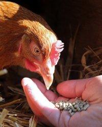 Мировой рынок кормовых добавок для птицы будет стоить почти $8 млн к 2018 году