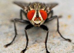 Первый научный журнал, сфокусированный на насекомых как продукте питания и корме