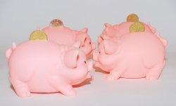 Сложности и возможности индустрии свиноводства