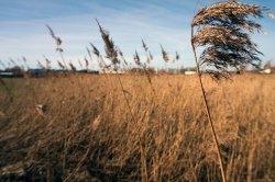 Мировая продовольственная безопасность требует адаптации к изменению климата