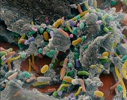 Новая программа на основе микроорганизмов положительно влияет на рост бройлеров