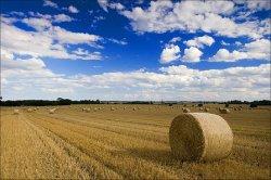 Будущее устойчивого сельского хозяйства требует оптимизации и коммуникации