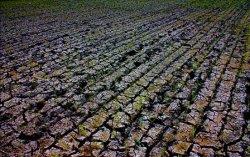 Эль-Ниньо губит зерновые, но повышает урожай сои