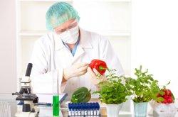Ученые собираются провести независимое исследование влияния ГМО на человека