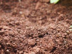 В Томске вырастили бактерии для переработки отходов в почве