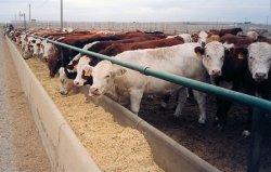 Тенденции рынка кормовых ароматизаторов и подсластителей