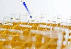 Сибирские ученые разработали на основе дрожжей антибиотики нового поколения