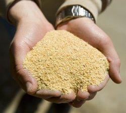 Что делает соевый шрот предпочтительным кормовым ингредиентом?