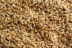 IGC: мировые цены на зерновые снижаются за счет улучшения погоды в Северном полушарии, цены на сою выходят на плато