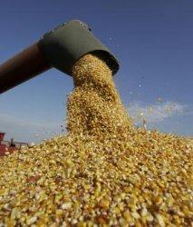 Мировые запасы зерновых могут достичь максимального уровня