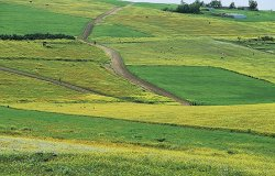 ФАО призывает адаптировать сельское хозяйство к последствиям изменения климата