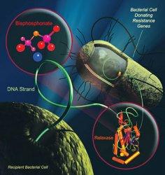 Слабое место устойчивых к антибиотикам бактерий найдено