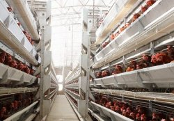 Конец дешевым кормам для птицы, предупреждают кормопроизводители