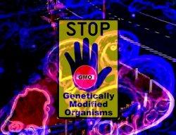 Статья, критикующая ГМО и удаленная из научных журналов, вновь опубликована