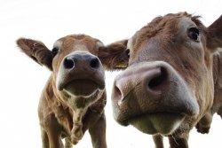 Опасения по поводу будущего российской молочной промышленности