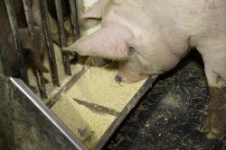 Сокращение афлотоксина B1 в кормах