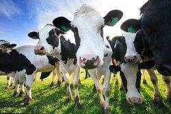 Цены на корма изменят мировую молочную индустрию