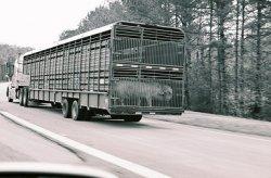 Россельхознадзор ужесточит порядок ввоза продукции транзитом через ЕС