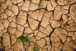 Что означает изменение климата для сельского хозяйства?