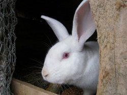 В Подмосковье создадут кролиководческий холдинг