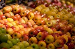 Россельхознадзор вводит запрет на ввоз почти всех видов овощей и фруктов из Польши