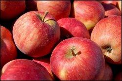 Цены на яблоки вырастут на 40% из-за запрета польских фруктов