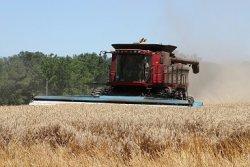 Прогноз урожая зерна в России продолжает расти