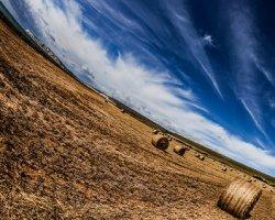 Мнение: Что помешает России поднять сельское хозяйство