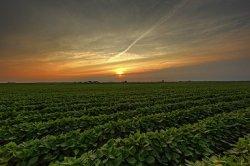 Исследование: локализация производства кормовых ингредиентов для животных
