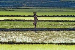 Сельскохозяйственная революция в Африке может привести к увеличению мировых выбросов углерода