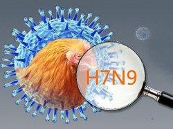 В Китае подтверждены новые случаи инфицирования людей вирусом птичьего гриппа