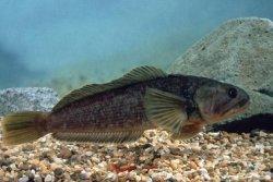 Россельхознадзор обнаружил почти 40 тонн реэкспортной рыбы из Испании и Норвегии, следовавшей из Украины в Крым