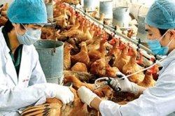 Вирус H5N6 вызывает особую тревогу