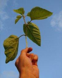 Сибирские ученые научились применять животноводческий препарат для защиты растений