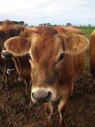 Навозные удобрения способствуют развитию устройчивости к антибиотикам