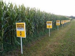 Участники европейского рынка сельхозпродукции призывают Еврокомиссию разрешить импорт трансгенных растений