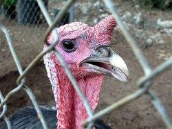 В Германии зарегистрирован первый случай заражения птичьим гриппом H5N8