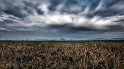 Крым отказался от посевов риса из-за проблем с водоснабжением