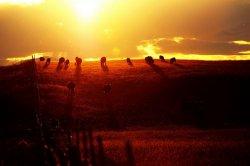 Ученые вычислили скрытое количество парниковых газов, которые содержатся в мясе