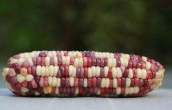 Ученые ищут альтернативу ГМО