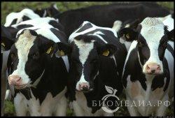 В Ленинградской области открыта новая молочная ферма ЗАО «Племзавод АгроБалт»