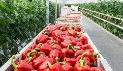 Россельхознадзор снял со Швейцарии подозрения в реэкспорте запрещенной продукции